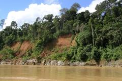 Tropical rainforest Amazonia, Madre de Dios, Peru